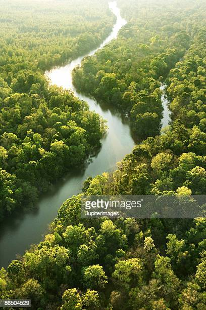 Winding river in forest, high angle view