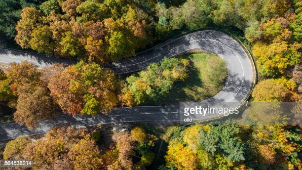 Winding road through autumnal forest