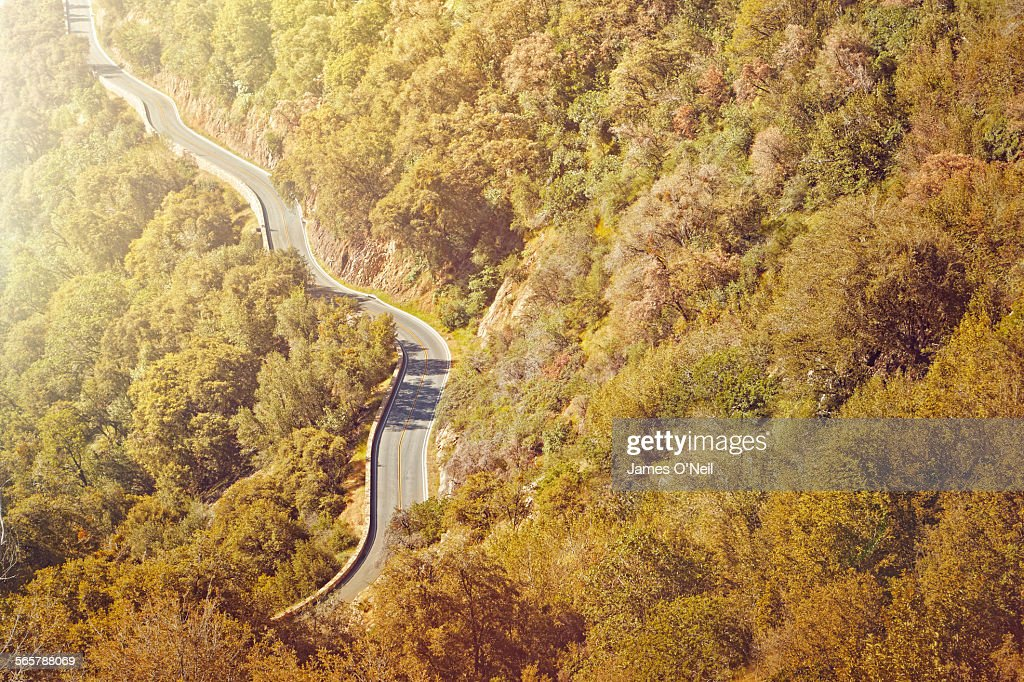 winding road through forests