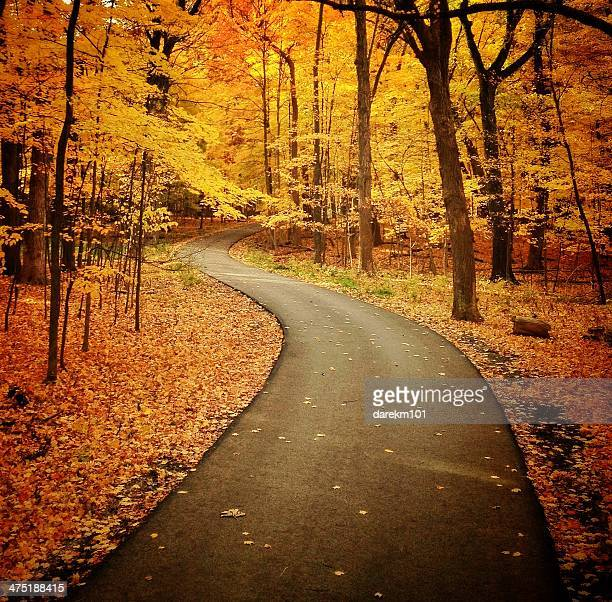 Road through autumn woods