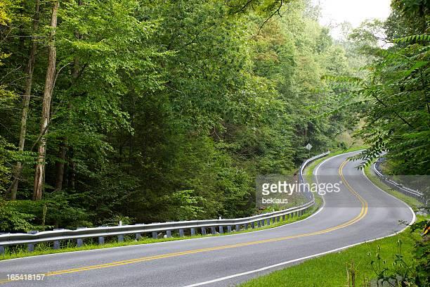 Kurvenreiche Straße durch dichte Wälder