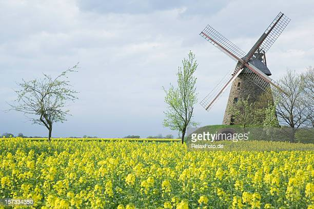 Windmill and canola field countryside (XXL)