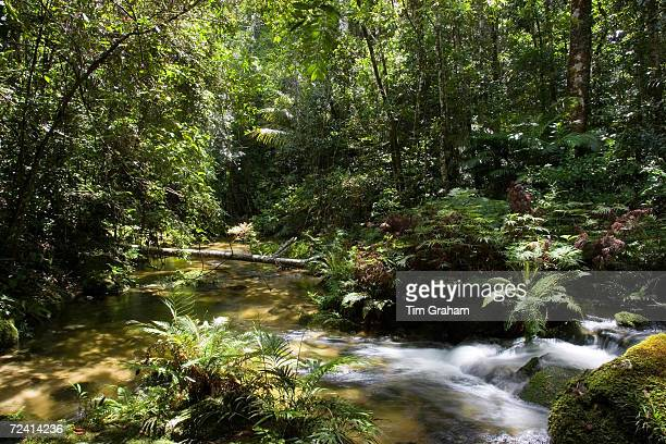 Windmill Creek at Mount Lewis State Forest in the Daintree Rainforest Queensland Australia