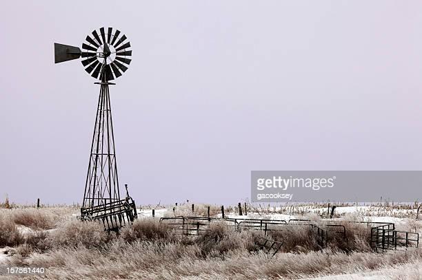 Mulino a vento, il grassland, viola alba