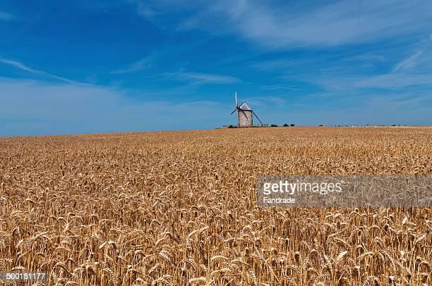 Windmill near the Mont Saint Michel