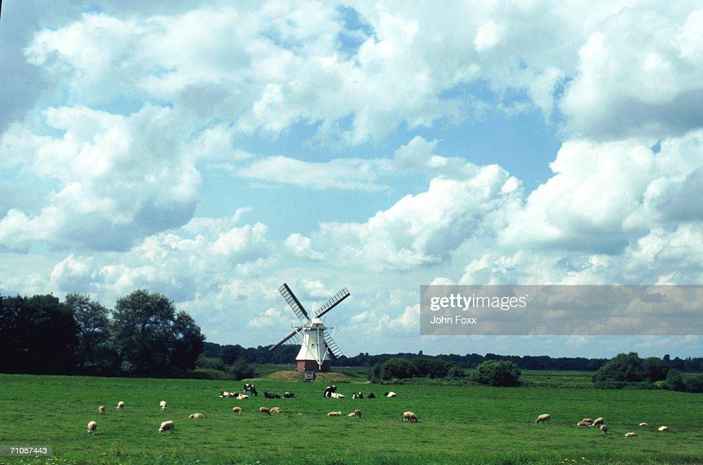 windmill, the Netherlands : Stock Photo