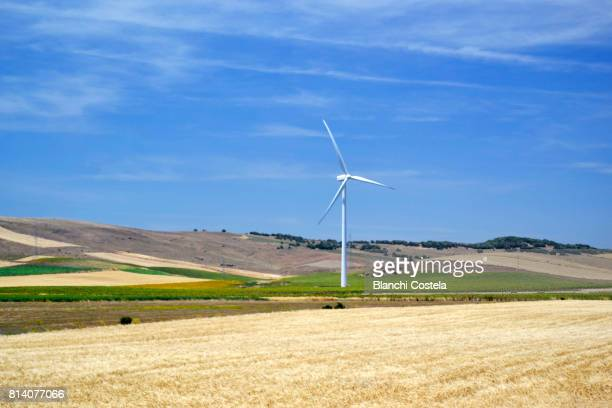 Windmills in the field in spring