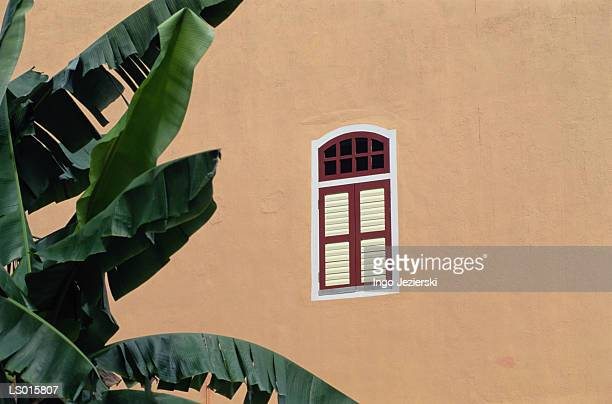 Window and Banana Tree Leaves