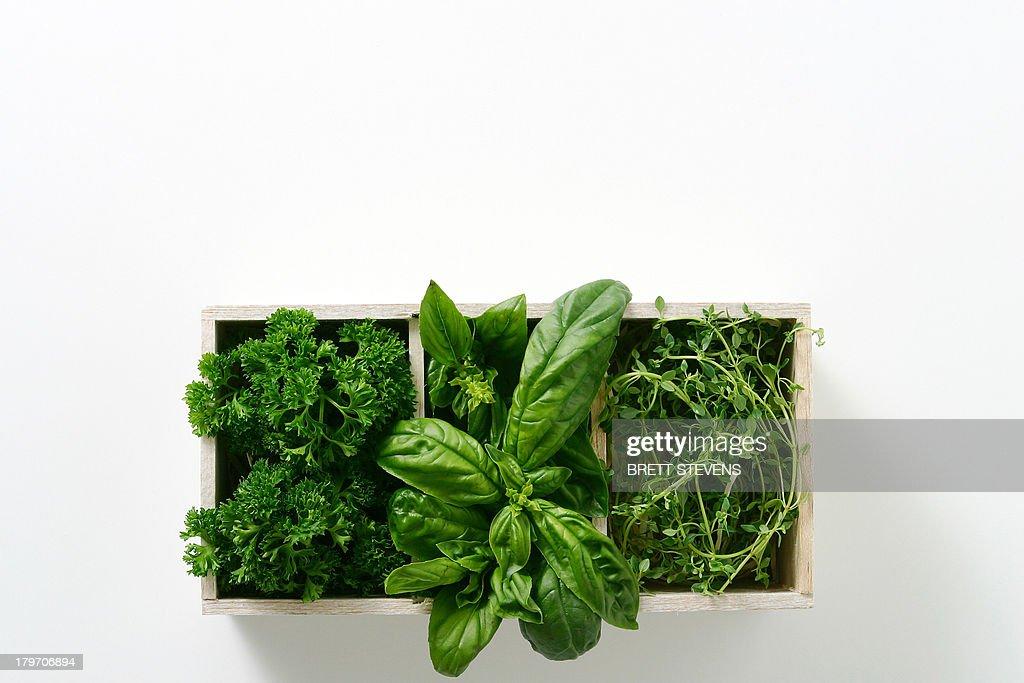 Window box of growing salad leaves