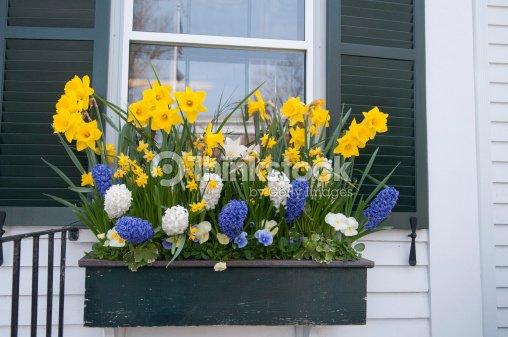 jardini re de fleurs de printemps photo thinkstock. Black Bedroom Furniture Sets. Home Design Ideas