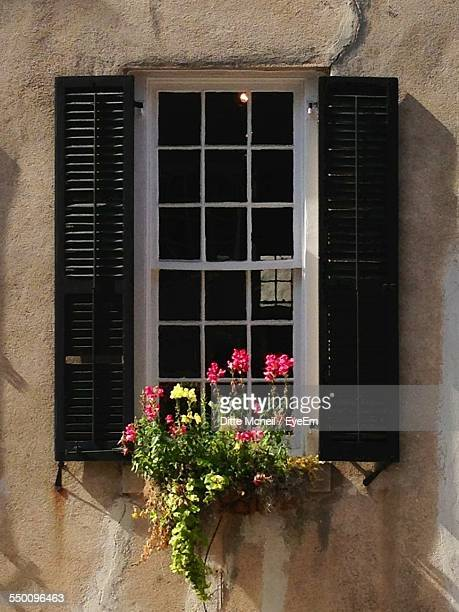 Window Box With Blooming Flowers