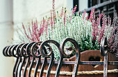 Autumn flowers on the windowsill. Graceful flower pot with the delicate flowers of lavender