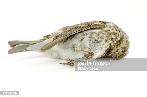 Window killed bird