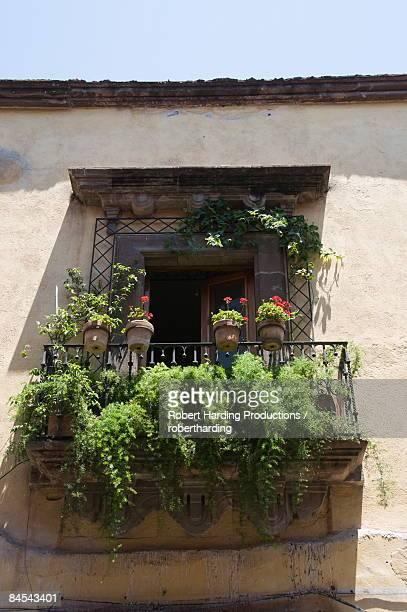 Windows of San Miguel de Allende (San Miguel), Guanajuato State, Mexico, North America