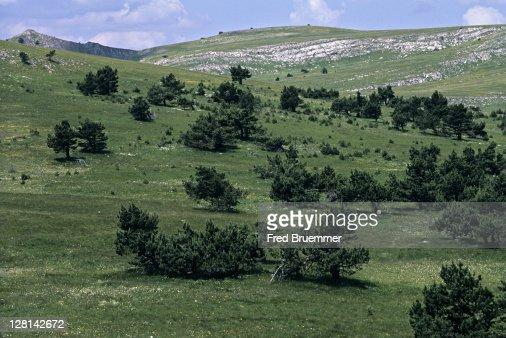 Wind-stunted trees in mountain meadow, Crimea, Ukraine : Stock Photo