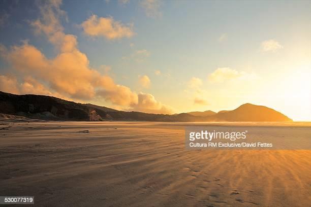 Windswept beach, Golden Bay at sunset, South Island, New Zealand