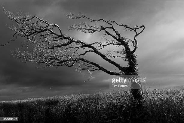 Windswept Tree and Stormy Sky