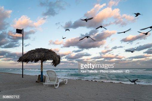 A windy dawn : Stock Photo