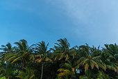 Windy palm tree against blue sky