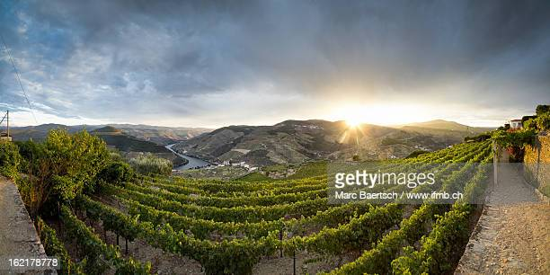 wine and sun in the Douro Valley