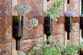 Wine bottles recycled as a succulent flower pot, hung on a wall