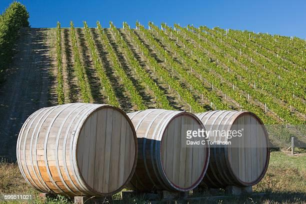 Wine casks and vines, Auntsfield Estate, Blenheim