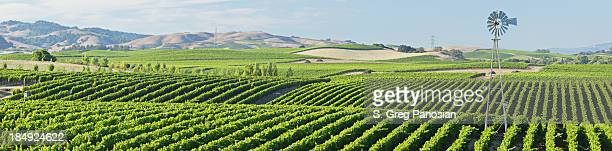 Panorama de la région viticole
