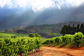 The rolling vineyard hills and mountains of the wine area in Cape Town