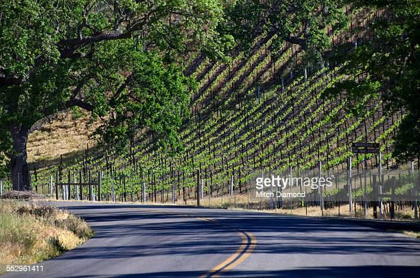wine country road