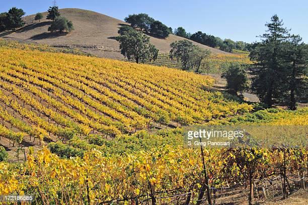 Wine Country Scenic