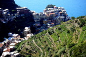 Wine fields overhang the village of Manarola in the 'Cinque Terre' area on September 23 2013 Wine picking is atypical due to the steep land close to...