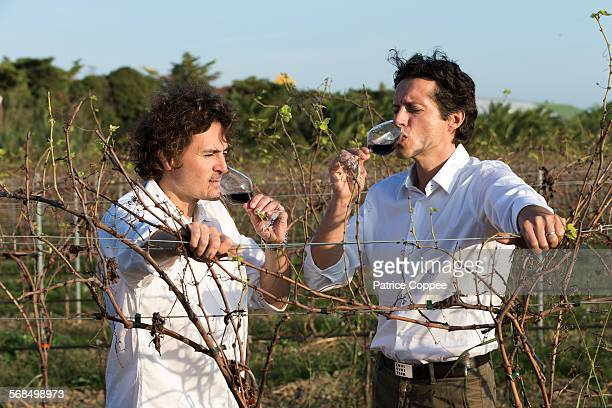 Wine growers in wine yards (Rivesaltes France)