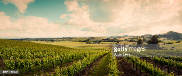 Wine vineyard shoot in Sonoma on a sunny day : Foto de stock