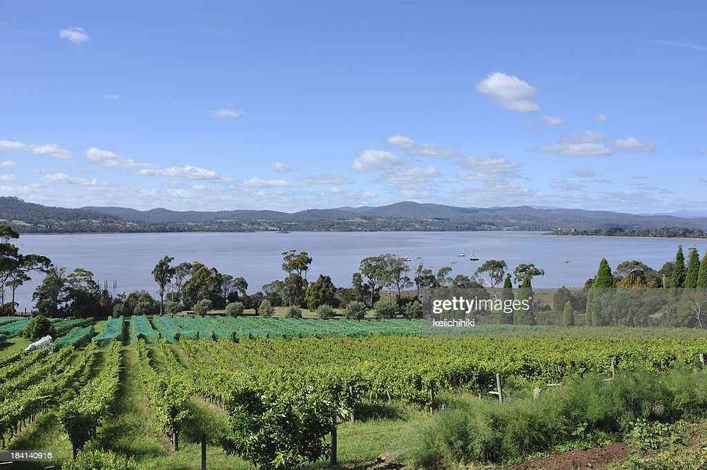 'Winery in Tamar Valley, Tasmania,'