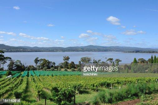 Winery in Tamar Valley, Tasmania,