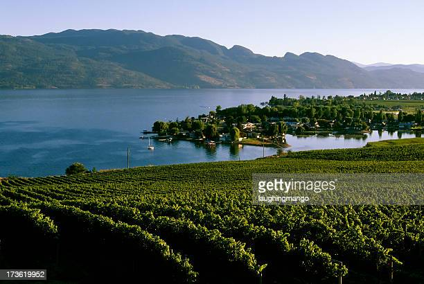 winery vineyard kelowna agriculture okanagan valley