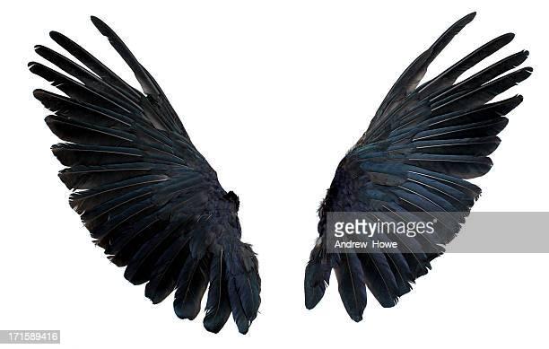 Flügel, isoliert auf weiss