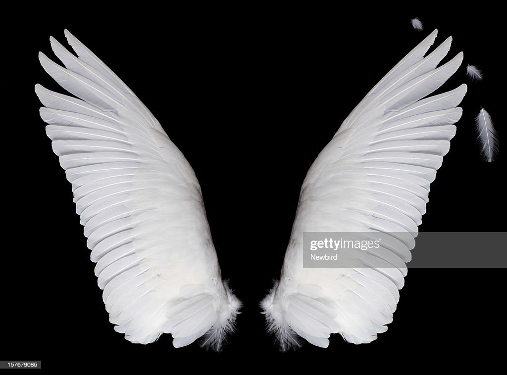 Wings on black background