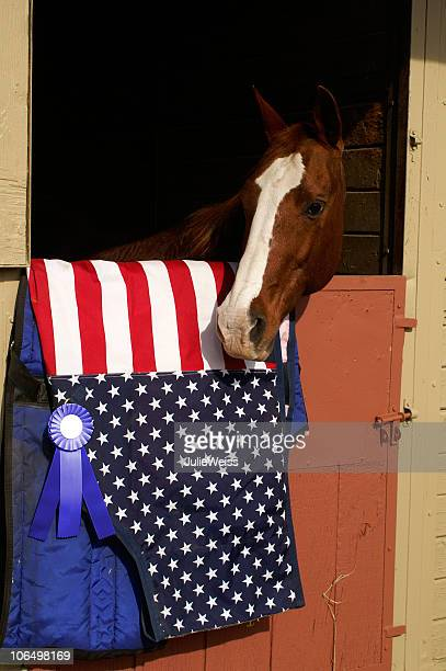 Preisgekrönte Horse
