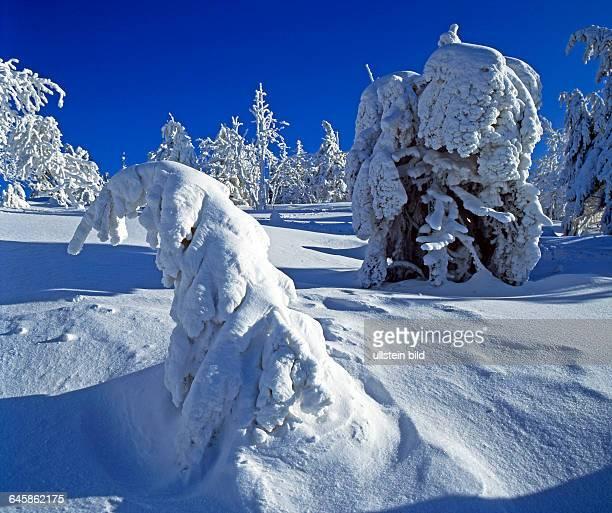 Winter auf dem Erzgebirgskamm mit tief verschneiten Fichten unter Schneelast