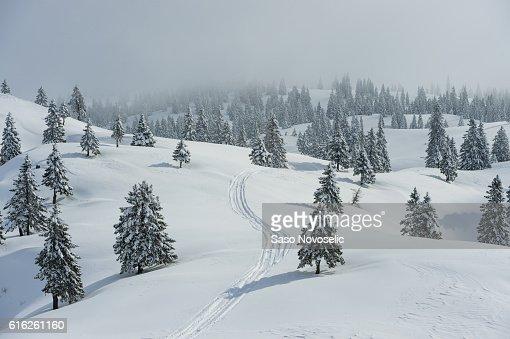 Fondo de invierno : Foto de stock
