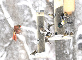 A variety of back-yard bird species visit an array of feeders