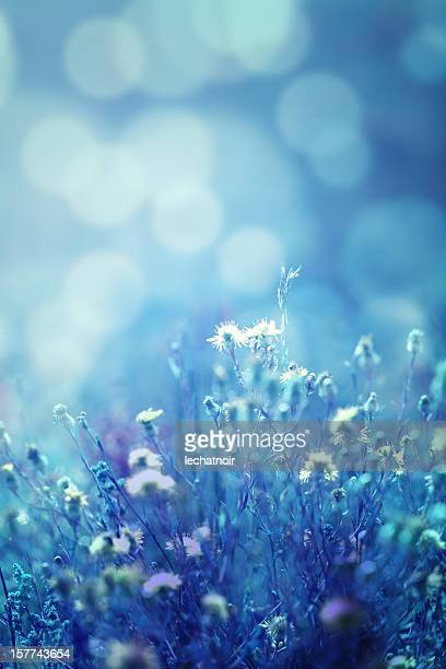 Winter colored nature bokeh background