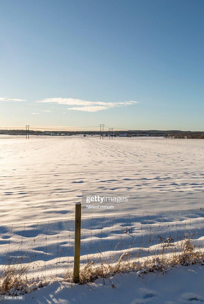 Winter Field in Umea, Sweden : Stock Photo