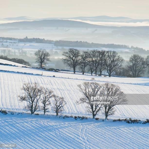 Inverno i campi