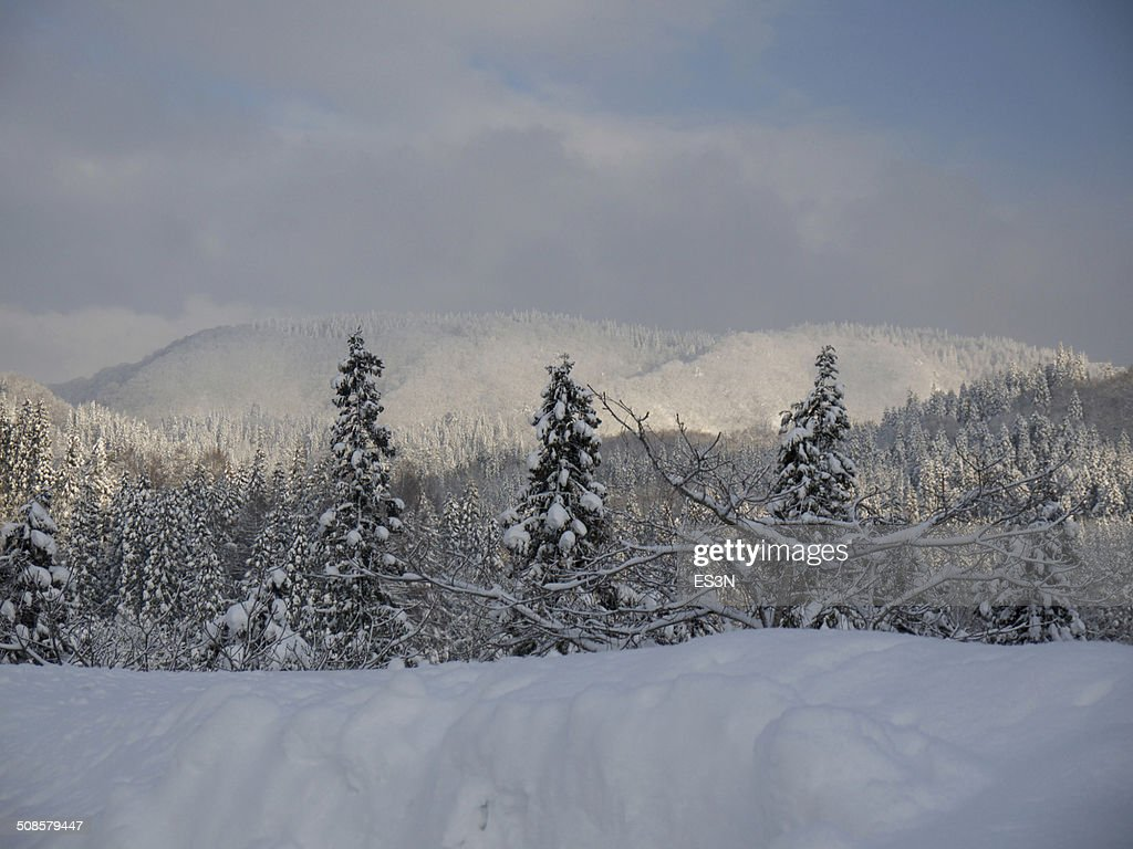 Winter forest in the evening : Stock Photo