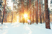 Landscape With Winter Forest And Bright Sunbeams. Sunrise, Sunset In Cold Snowy Forest