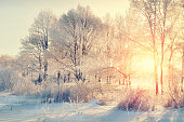 Winter landscape - frosted trees in the forest at the sunset with sunlight beams