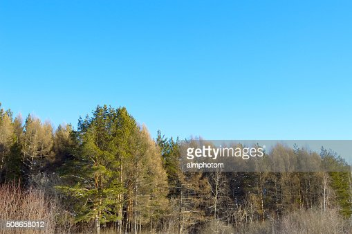 winter forest on a hillside : Stock Photo