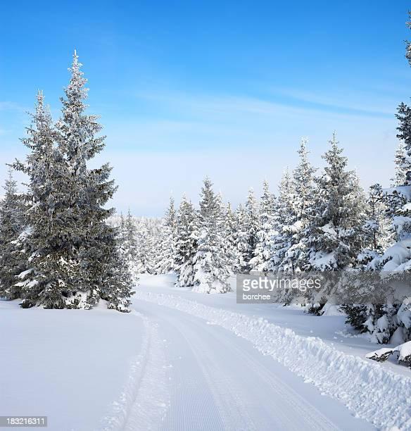 Sentier de la forêt d'hiver